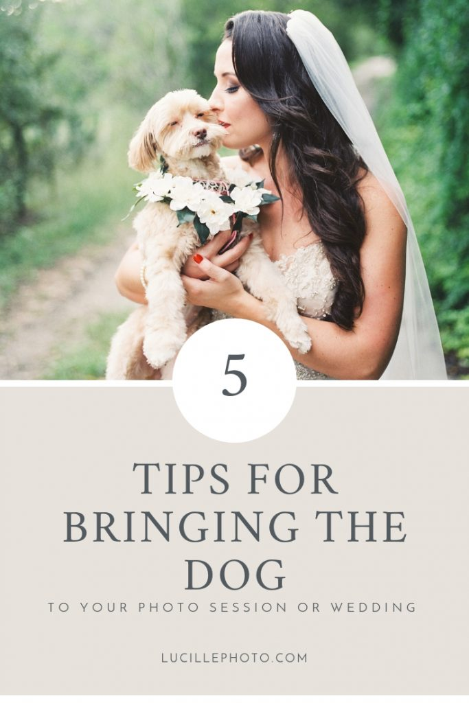 5 Tips for Bringing Your Dog to Your Engagement Session or Wedding